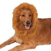 Lion's Mane Deluxe Pet Costume Accessory - One Size